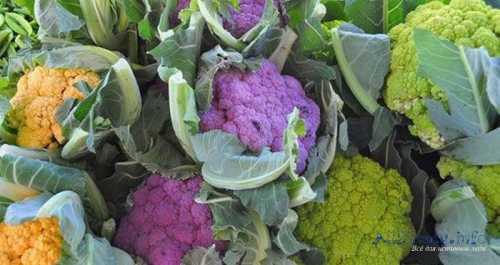 цветная капуста: 10 причин, чтобы есть ее чаще