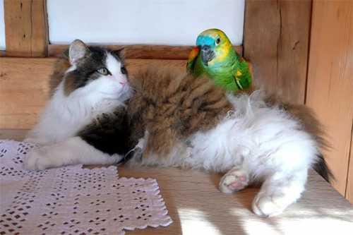 попугай поёт в душе песню беловежская пуща видео