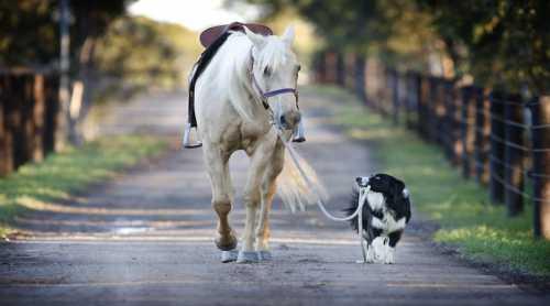 собака разговаривает с хозяином и просит картошку на ужин вот это интеллект